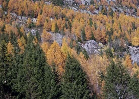 automne à vallorcine
